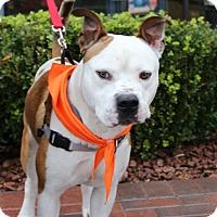 Adopt A Pet :: CIROC - Las Vegas, NV