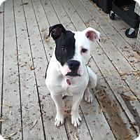 Adopt A Pet :: Mac - Eastpointe, MI