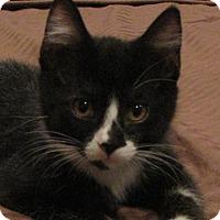 Adopt A Pet :: Mimi - Berkeley Hts, NJ