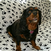 Adopt A Pet :: Penny 5yr Adopted - Mentor, OH