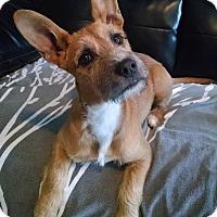 Adopt A Pet :: Pumpkin (DD) - Harrisonburg, VA