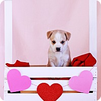 Adopt A Pet :: Rigby - Waldorf, MD