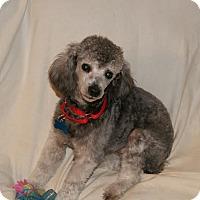 Adopt A Pet :: Buddy - Urbana, OH