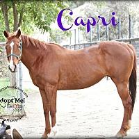 Adopt A Pet :: Capri - Canyon Country, CA