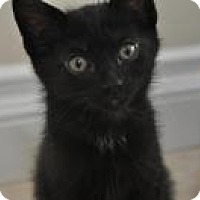 Adopt A Pet :: Lucky - Mission Viejo, CA