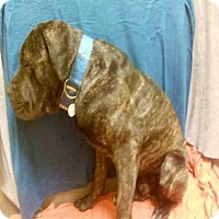 Adopt A Pet :: *HUGO - Upper Marlboro, MD