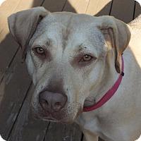 Adopt A Pet :: Karma - Tomah, WI