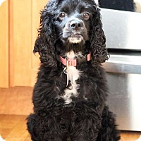 Adopt A Pet :: Molly - Sudbury, MA