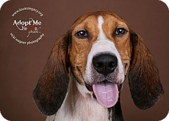 Treeing Walker Coonhound Dog for adoption in Cincinnati, Ohio - June