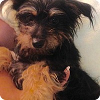 Adopt A Pet :: ! 3 Willow - Colton, CA