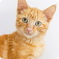 Adopt A Pet :: Hercules - Baltimore, MD