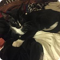 Adopt A Pet :: Igor - Fall River, MA
