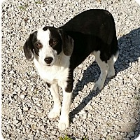 Border Collie Mix Dog for adoption in Urbana, Ohio - Joey