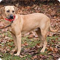 Adopt A Pet :: Winnie - Atlanta, GA