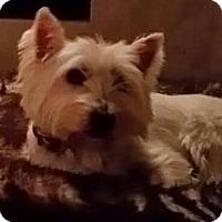 Adopt A Pet :: CAMERON - Frisco, TX
