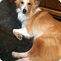 Adopt A Pet :: Remy - Stafford, TX
