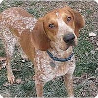 Adopt A Pet :: Dillon - Adopted! - Blairstown, NJ