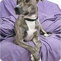 Adopt A Pet :: Birmingham - Mocksville, NC