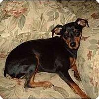 Adopt A Pet :: Skylar - Phoenix, AZ