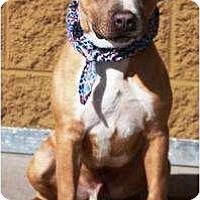 Adopt A Pet :: Tanner - Gilbert, AZ