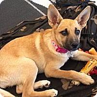 Adopt A Pet :: Suki - Phoenix, AZ