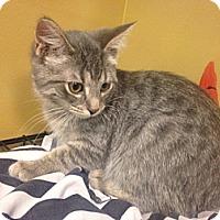 Adopt A Pet :: Parsley - Byron Center, MI