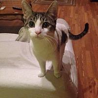 Adopt A Pet :: Honeybun - Brooklyn, NY