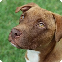 Adopt A Pet :: Jack - Pinehurst, NC