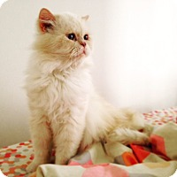 Adopt A Pet :: Caprice - Beverly Hills, CA