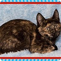 Adopt A Pet :: Lois - Mt. Prospect, IL