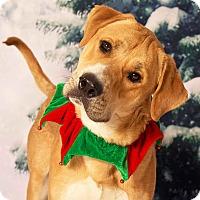 Adopt A Pet :: Duckie - Gilbert, AZ