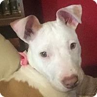 Adopt A Pet :: Lemon Drop - Livermore, CA