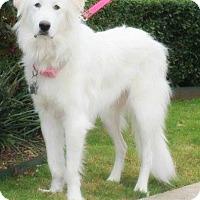 Adopt A Pet :: Khloe - Kyle, TX