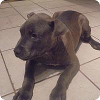Adopt A Pet :: Max - Barnegat, NJ