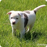 Adopt A Pet :: Catie - Bedford, VA