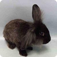 Adopt A Pet :: HOPPER - Brooklyn, NY