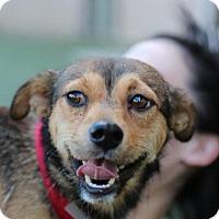 Adopt A Pet :: Enoch O'Connor - Brooklyn, NY