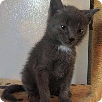Adopt A Pet :: Smokey - Jefferson, NC