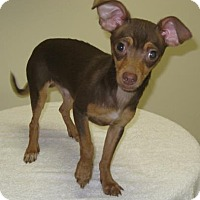 Adopt A Pet :: Tamale - Gary, IN