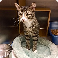 Adopt A Pet :: Chester - Colmar, PA