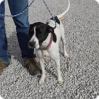 Adopt A Pet :: Whitney - Belleville, MI