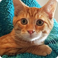 Adopt A Pet :: Dino - Colfax, IA