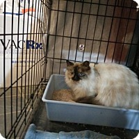Adopt A Pet :: Mona - Avon, OH