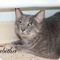Adopt A Pet :: Tabitha - Middleburg, FL