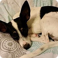 Adopt A Pet :: Sally - Walker, LA