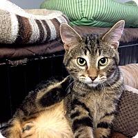 Adopt A Pet :: Runde - Lombard, IL