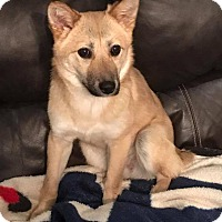 Adopt A Pet :: Neptune - Smithtown, NY