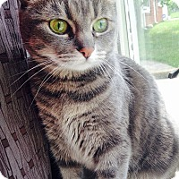 Adopt A Pet :: Lola - Covington, KY