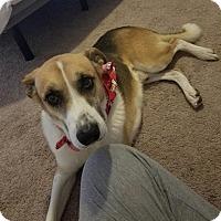 Adopt A Pet :: Ranger - Charlotte, NC