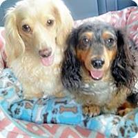 Adopt A Pet :: Mojo/Bailee Bonded Pair - Greenville, SC